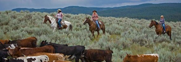 us-dude-ranches-and-us-guest-ranches