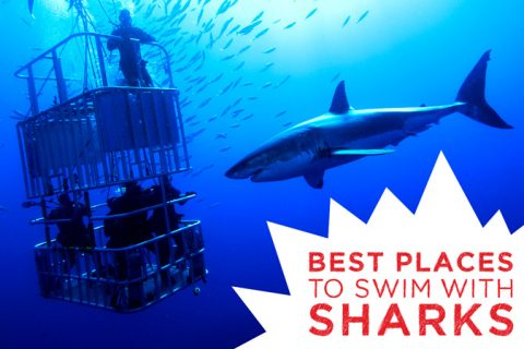 Best Places to Swim with Sharks