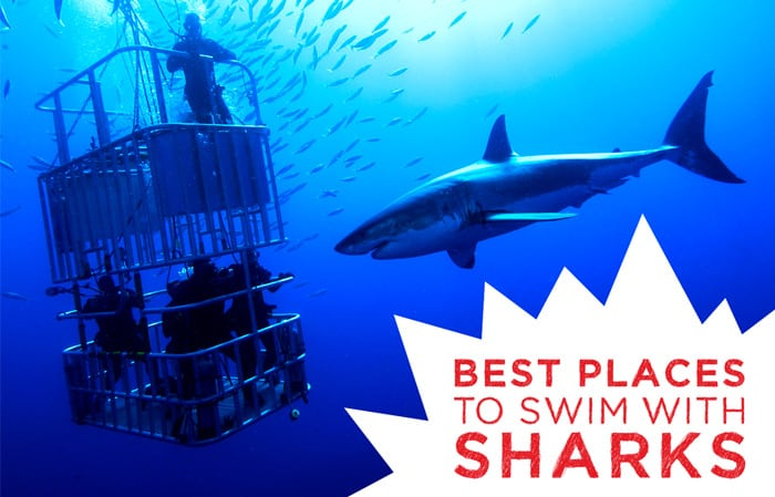 Best-Places-to-Swim-With-Sharks
