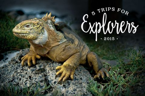 5 Trips for Explorers